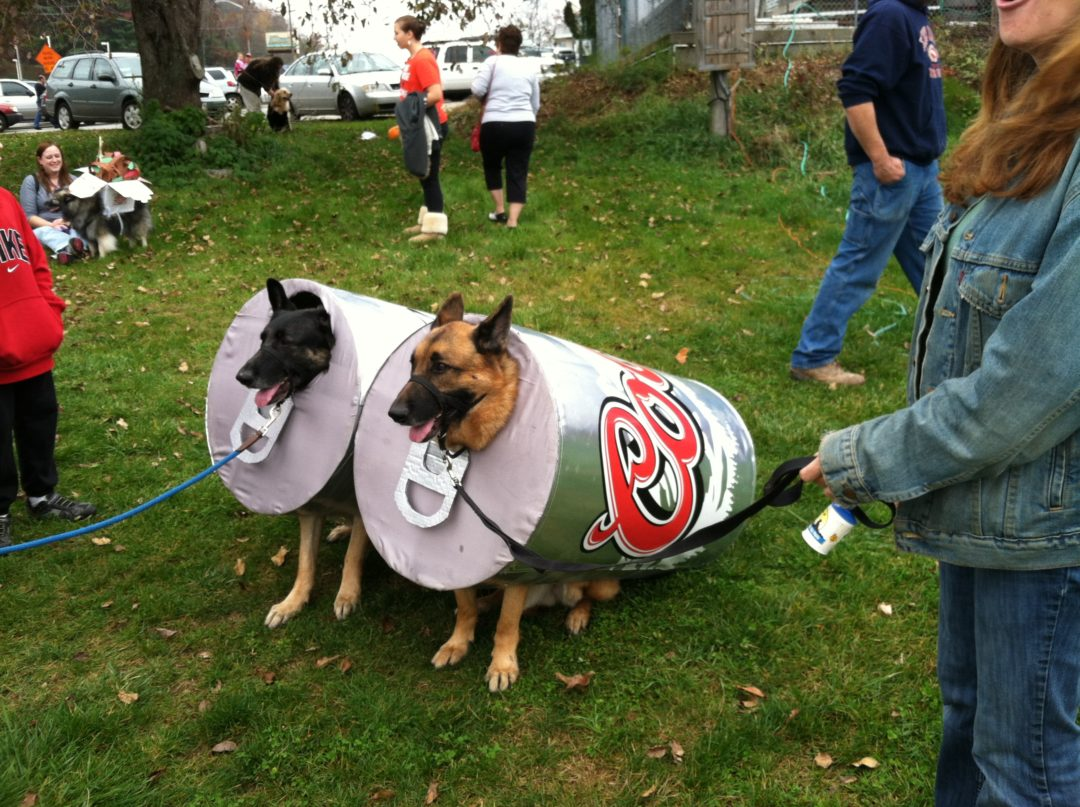 klems hosts an annual dog halloween costume contest that has over 70 dogs in costume