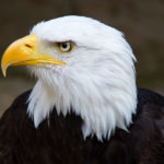 Family Business and the Bald Eagle: Fearlessness